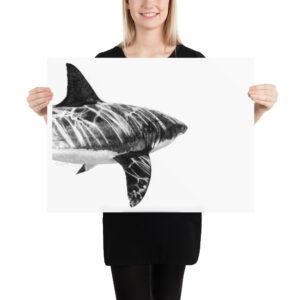 Matte Poster – Graphite Shark 003