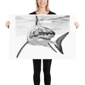 Matte Poster – Graphite Shark 004