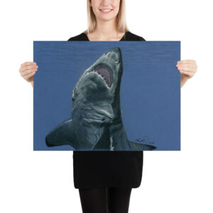 Matte Poster – Colored Pencil Shark 006