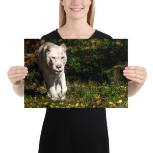 Photo Print – White Lion in Fall