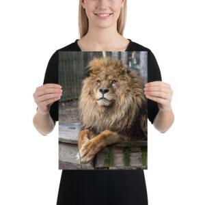 Photo Print – Mufasa Portrait