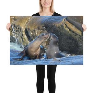 Photo Print – Sea Lion Kiss