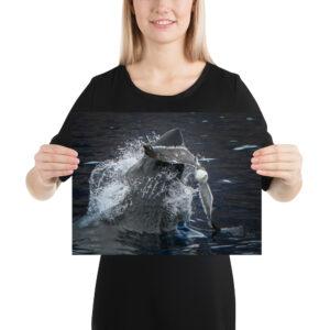 "Photo Print – ""Dante and Gull"", Great White Shark by Nikki Brant Sevy"